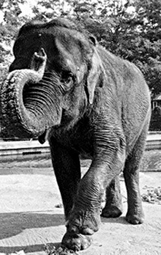 Where do elephants go when they die?